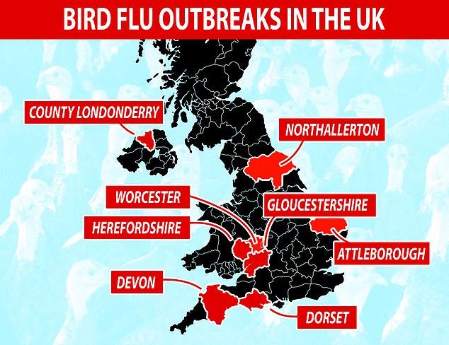 Fugleinfluenza